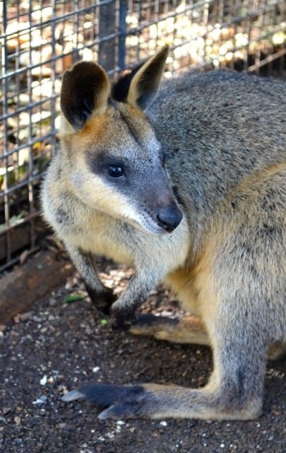 Featherdale Wildlife Park02