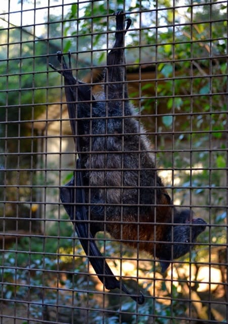 Featherdale Wildlife Park22