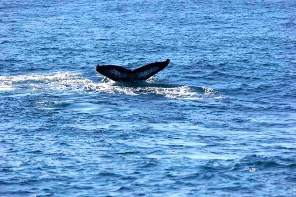 Whale Watching Sydney Harbour06